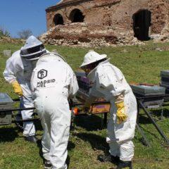 Las abejas Pepineras. Artículo nº1