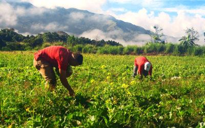 16 millones de euros en ayudas para agricultores y ganaderos