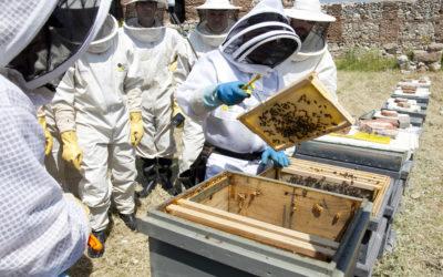 La Parroquia San Salvador acoge a alrededor de 40.000 abejas que deberán ser retiradas para poder continuar con las obras de restauración de la iglesia