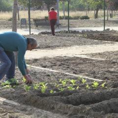 El Ayuntamiento entrega las llaves de los 65 huertos urbanos a vecinos mayores de Leganés
